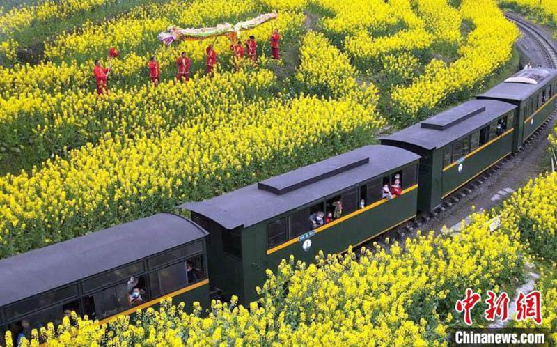 le « train à vapeur à destination du printemps » célèbre l'arrivée du printemps et des fleurs de colza dans dans la province du Sichuan